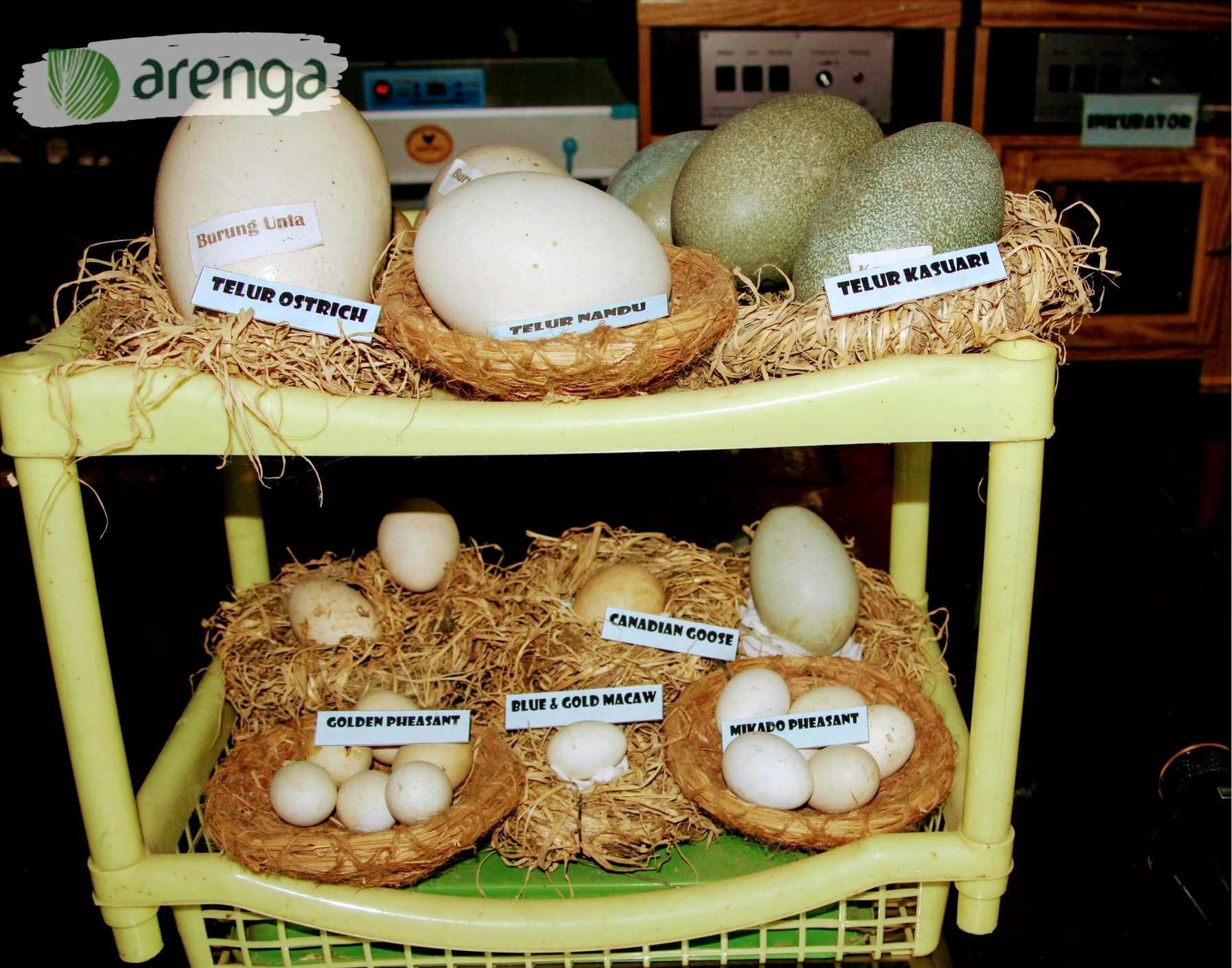 Serba-serbi tips mengolah telur